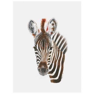 baby zebra art canvas