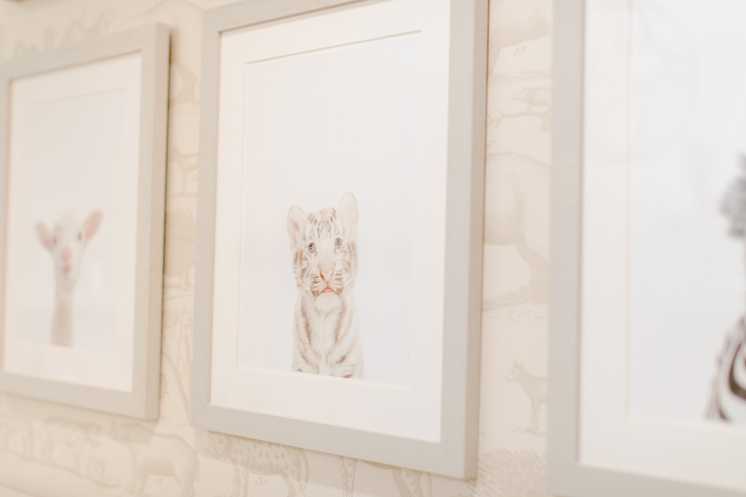 Baby Animal Photographs | Little Crown Interiors