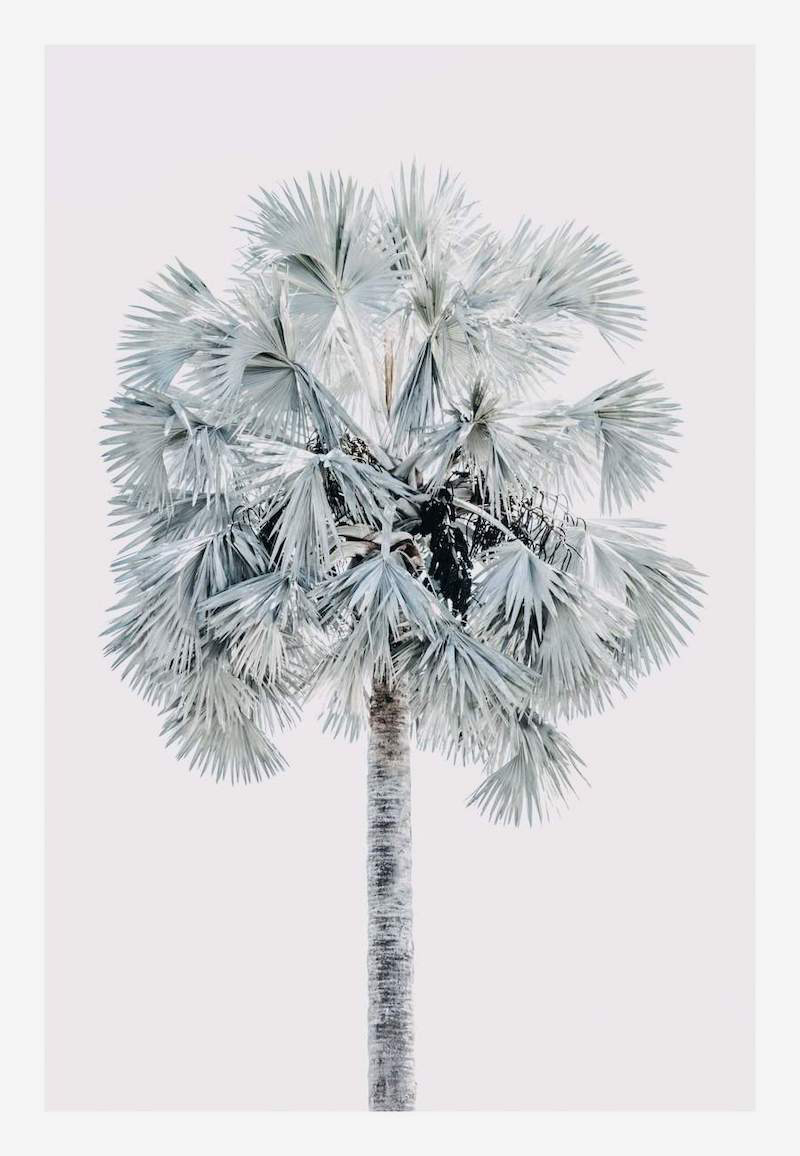 Blue Palm Tree Print | Little Crown Interiors Shop